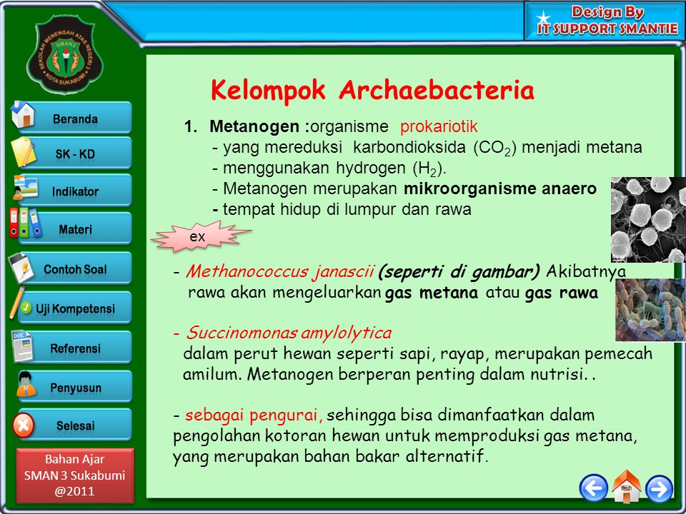 Kelompok Archaebacteria