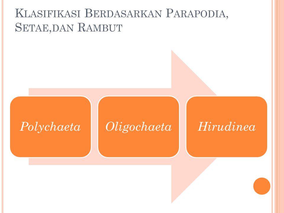 Klasifikasi Berdasarkan Parapodia, Setae,dan Rambut