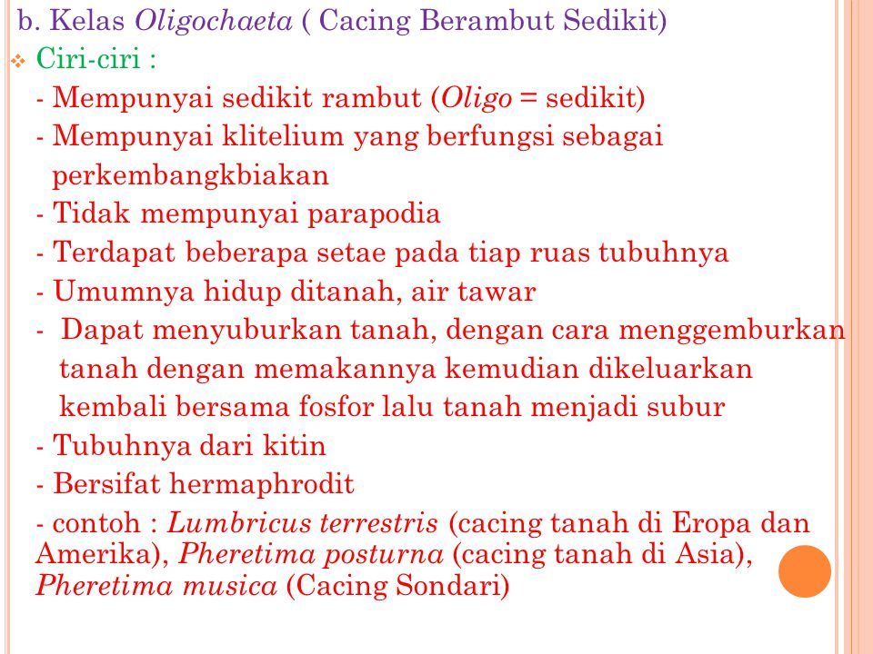b. Kelas Oligochaeta ( Cacing Berambut Sedikit)