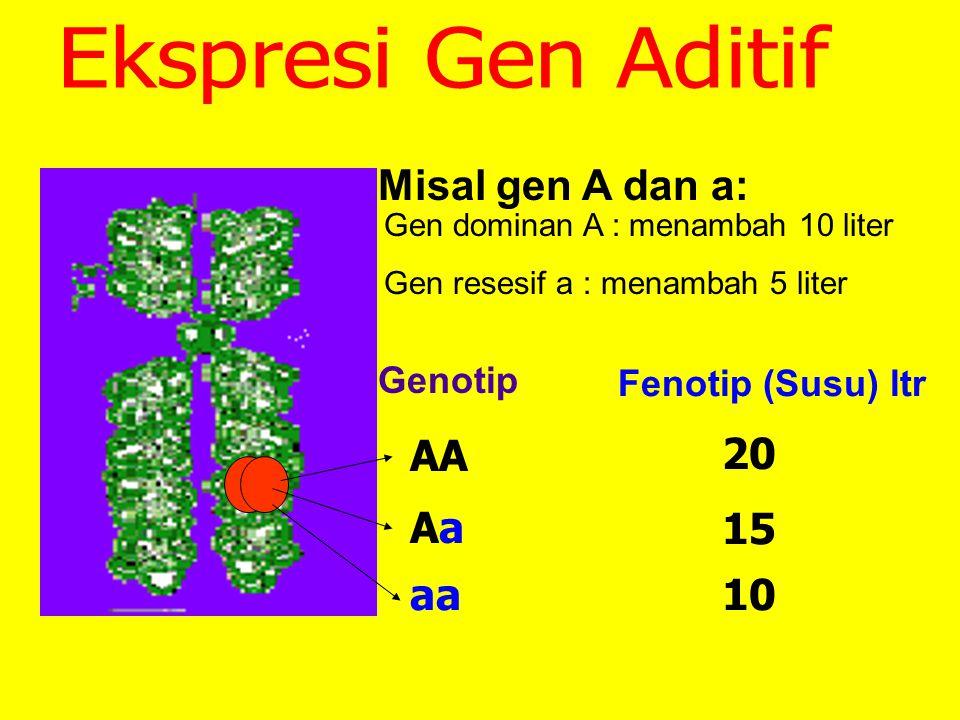 Ekspresi Gen Aditif Misal gen A dan a: AA 20 Aa 15 aa 10 Genotip