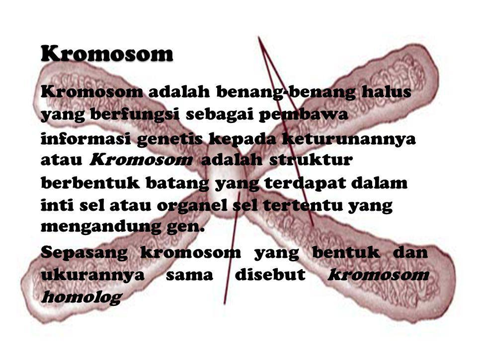 Kromosom Kromosom adalah benang-benang halus yang berfungsi sebagai pembawa.