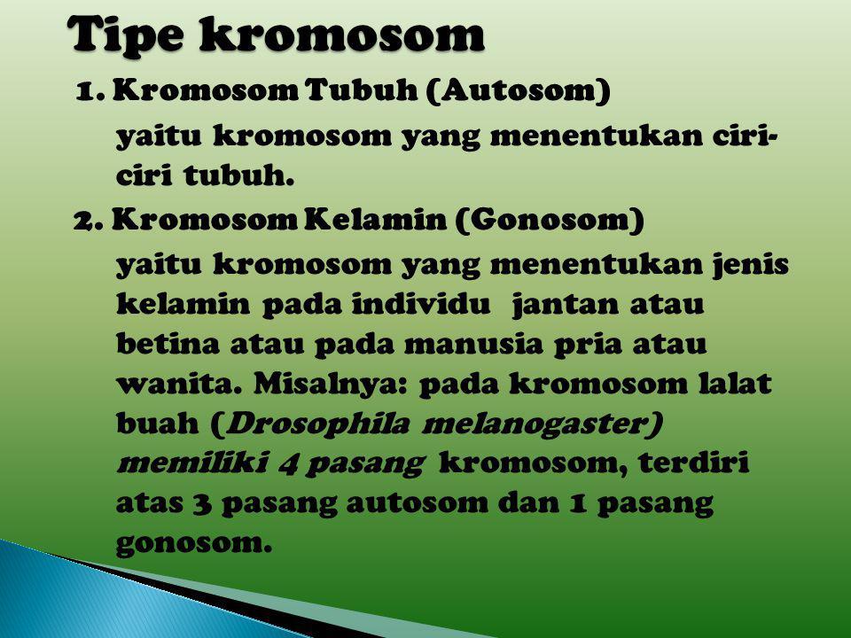 Tipe kromosom 1. Kromosom Tubuh (Autosom)