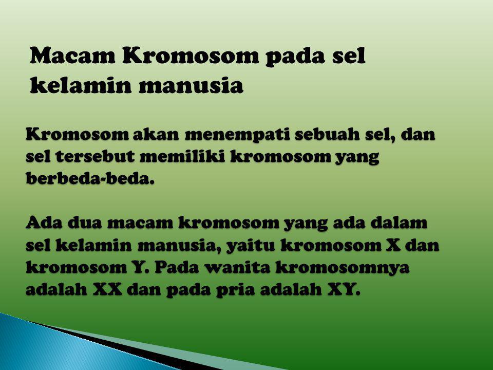Macam Kromosom pada sel kelamin manusia
