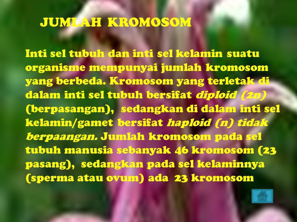 JUMLAH KROMOSOM