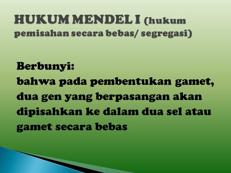 HUKUM MENDEL I (hukum pemisahan secara bebas/ segregasi)