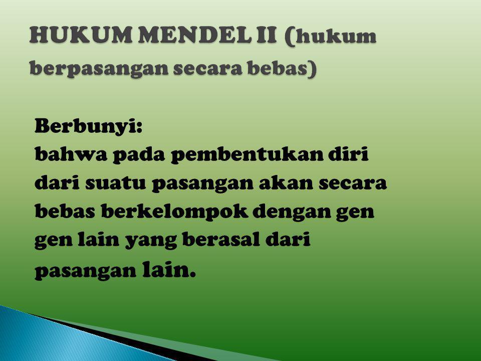 HUKUM MENDEL II (hukum berpasangan secara bebas)