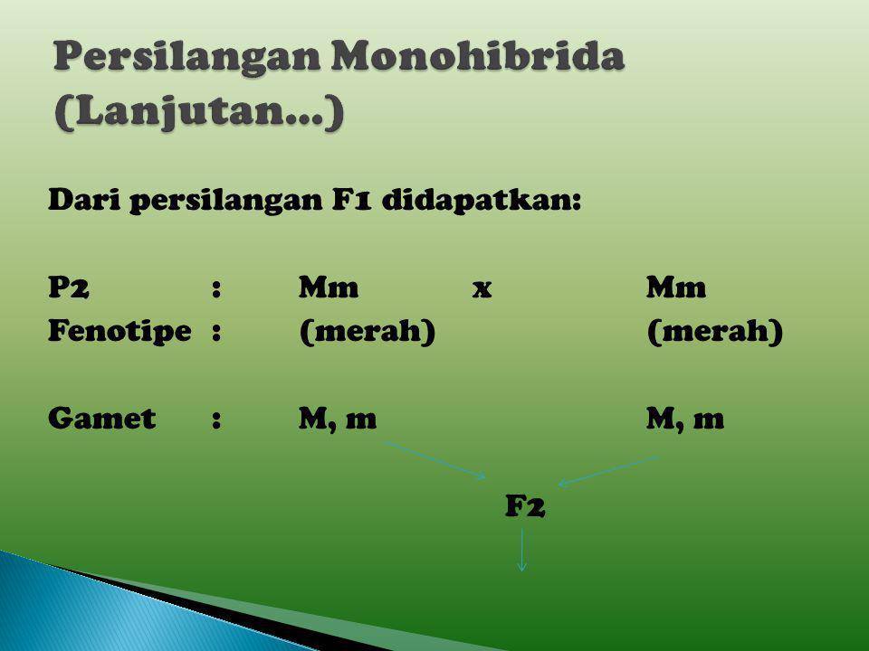 Persilangan Monohibrida (Lanjutan…)