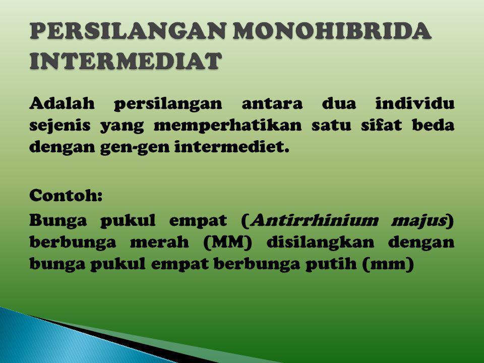 PERSILANGAN MONOHIBRIDA INTERMEDIAT
