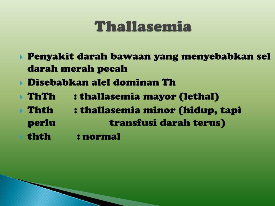 Thallasemia Penyakit darah bawaan yang menyebabkan sel darah merah pecah. Disebabkan alel dominan Th.