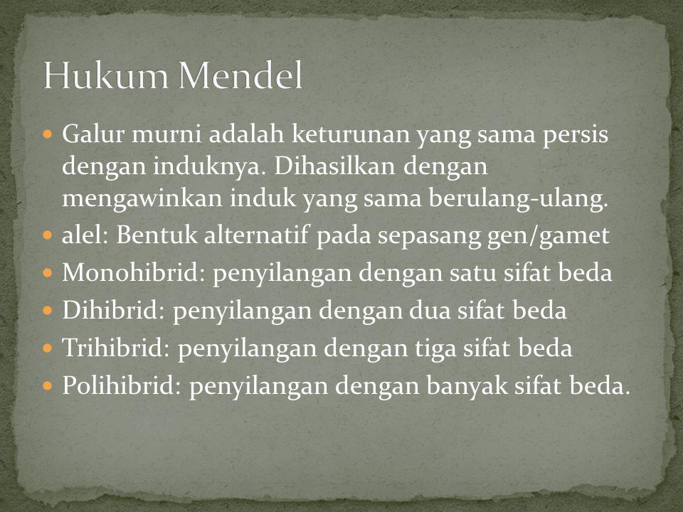 Hukum Mendel Galur murni adalah keturunan yang sama persis dengan induknya. Dihasilkan dengan mengawinkan induk yang sama berulang-ulang.