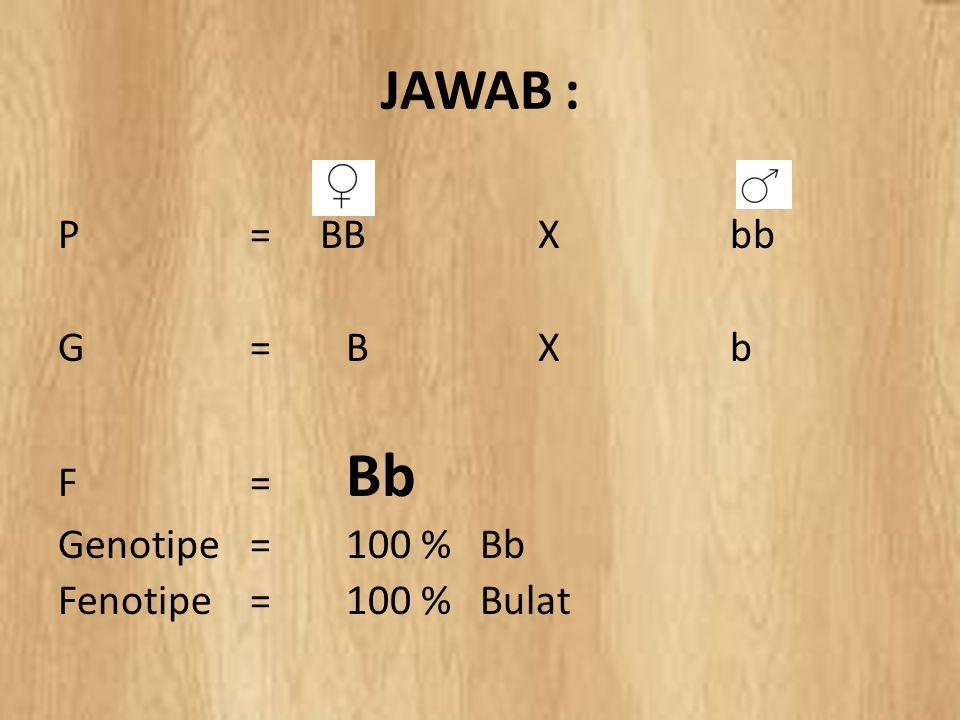JAWAB : P = BB X bb G = B X b F = Bb Genotipe = 100 % Bb Fenotipe = 100 % Bulat