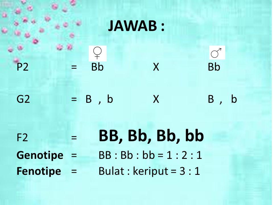 JAWAB : P2 = Bb X Bb G2 = B , b X B , b F2 = BB, Bb, Bb, bb Genotipe = BB : Bb : bb = 1 : 2 : 1 Fenotipe = Bulat : keriput = 3 : 1