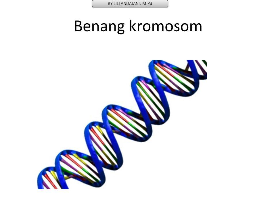 Benang kromosom