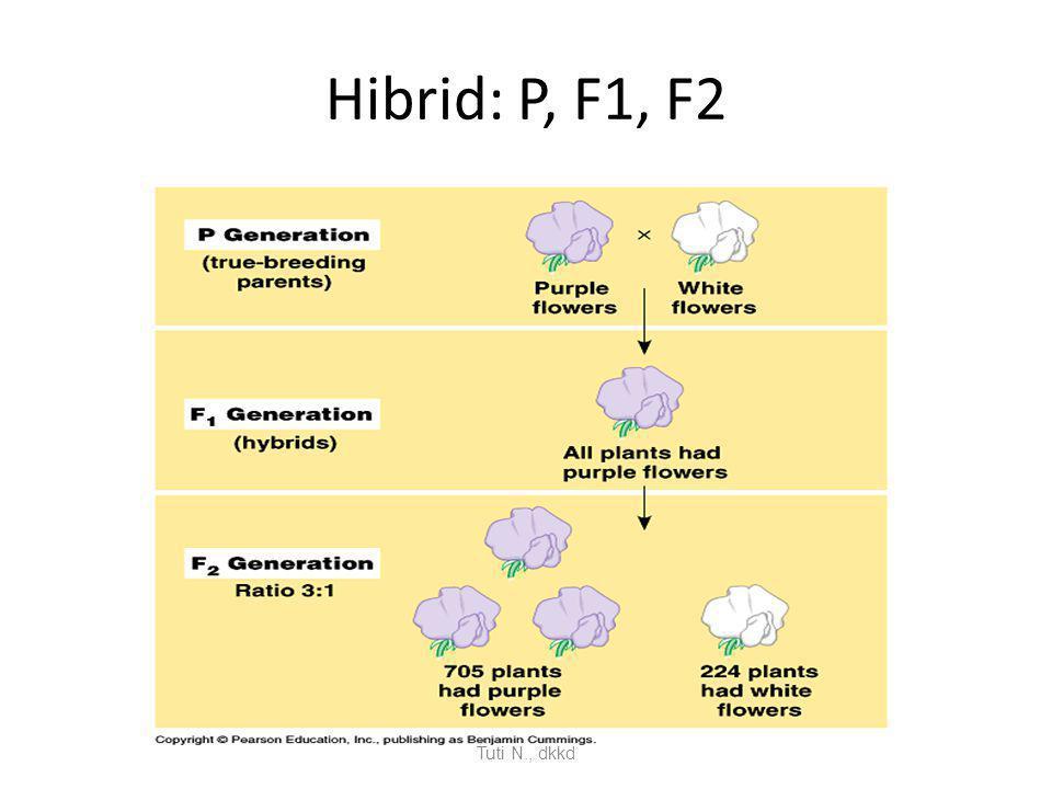 Hibrid: P, F1, F2 Tuti N., dkkd