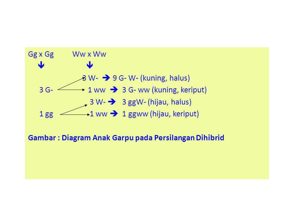 Gg x Gg Ww x Ww   3 W-  9 G- W- (kuning, halus) 3 G- 1 ww  3 G- ww (kuning, keriput) 3 W-  3 ggW- (hijau, halus) 1 gg 1 ww  1 ggww (hijau, keriput) Gambar : Diagram Anak Garpu pada Persilangan Dihibrid