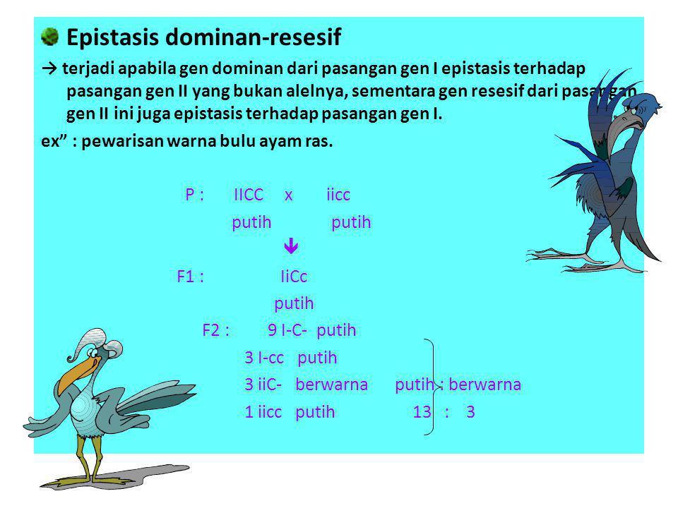 Epistasis dominan-resesif