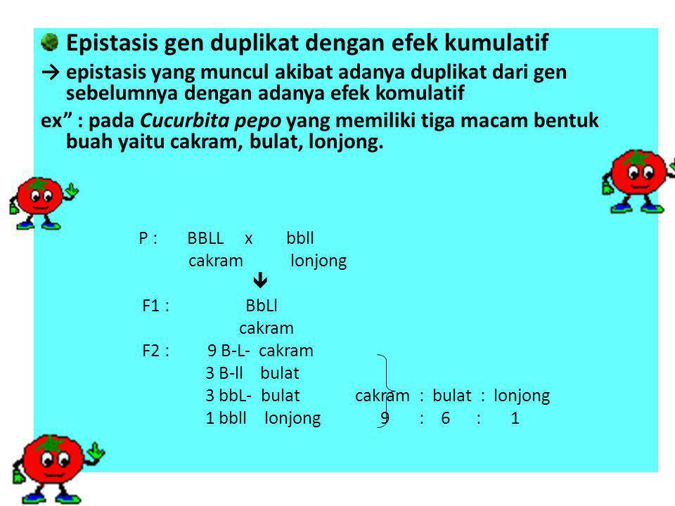 Epistasis gen duplikat dengan efek kumulatif