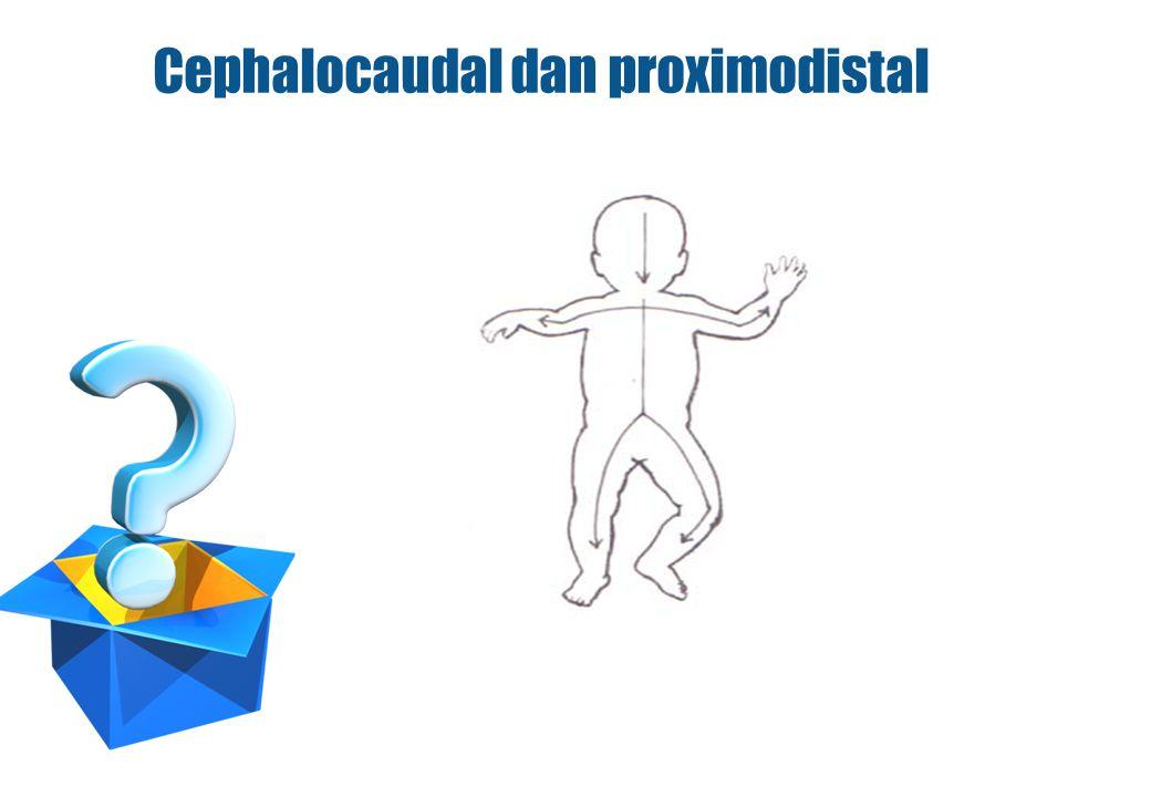 Cephalocaudal dan proximodistal