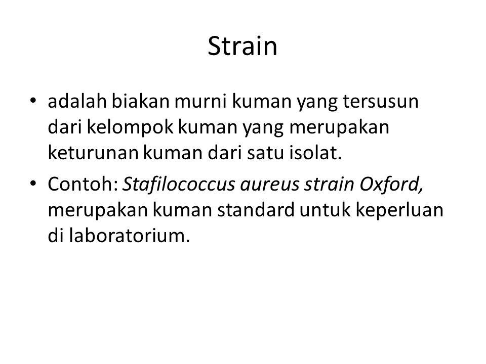 Strain adalah biakan murni kuman yang tersusun dari kelompok kuman yang merupakan keturunan kuman dari satu isolat.