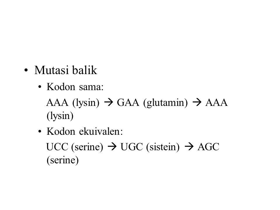 Mutasi balik Kodon sama: AAA (lysin)  GAA (glutamin)  AAA (lysin)