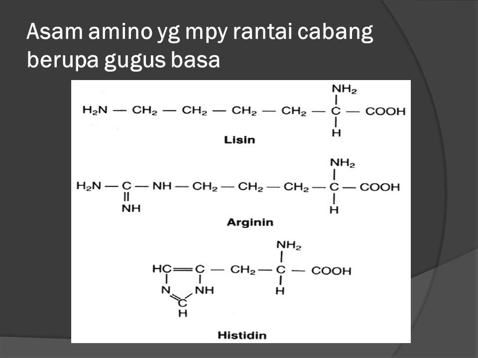 Asam amino yg mpy rantai cabang berupa gugus basa