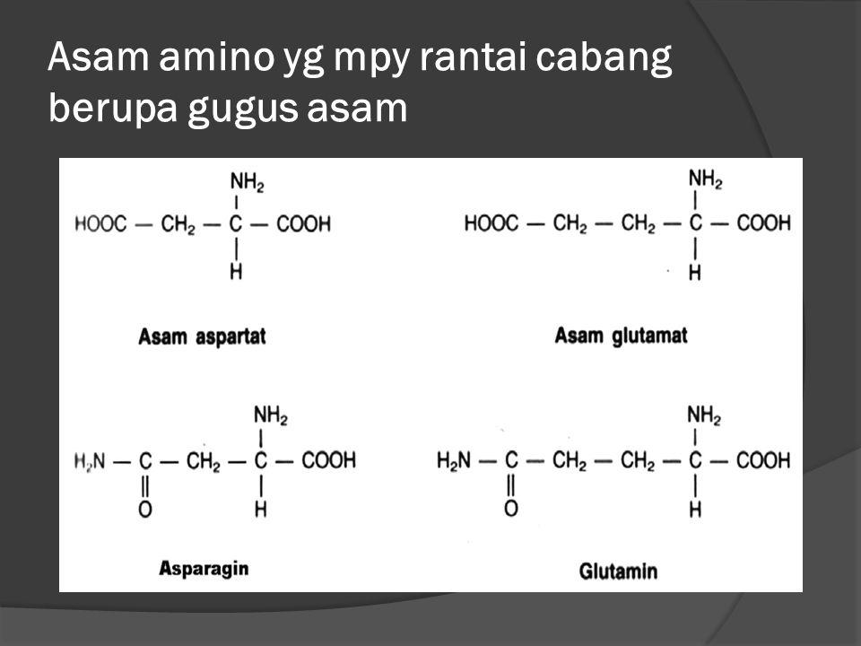 Asam amino yg mpy rantai cabang berupa gugus asam