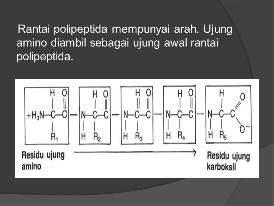 Rantai polipeptida mempunyai arah