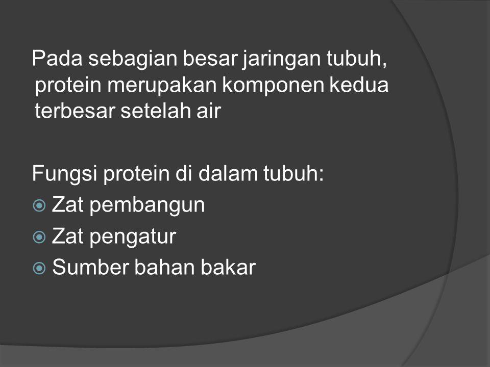 Pada sebagian besar jaringan tubuh, protein merupakan komponen kedua terbesar setelah air