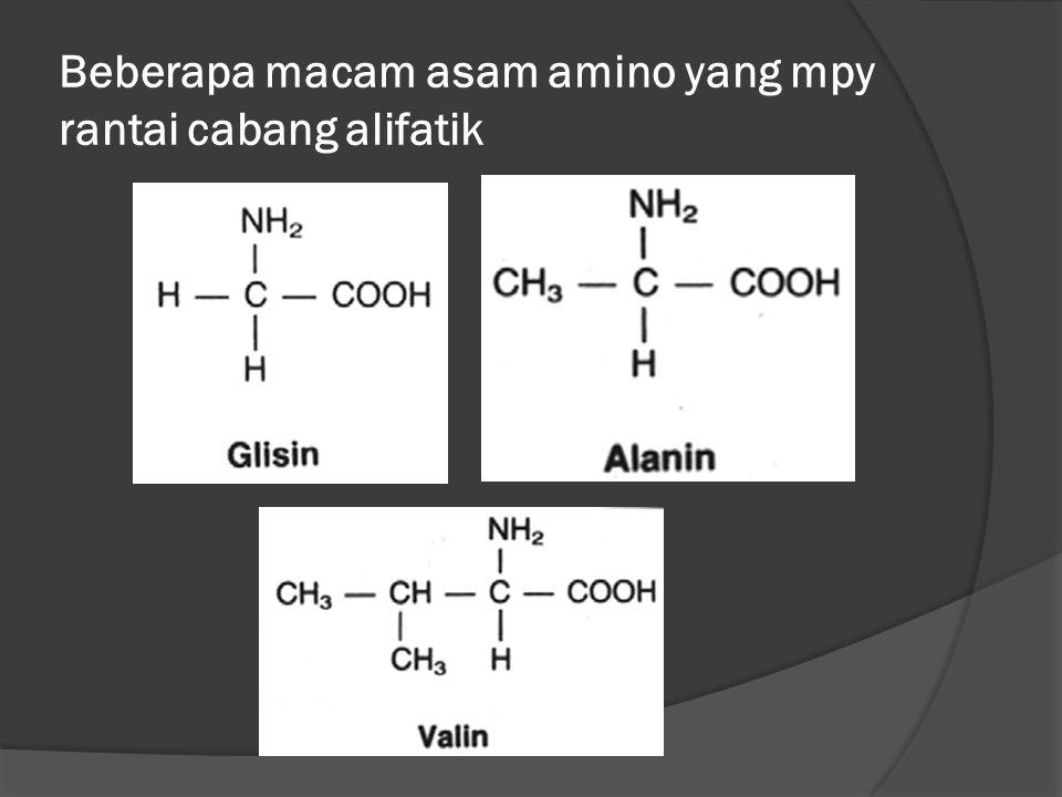 Beberapa macam asam amino yang mpy rantai cabang alifatik