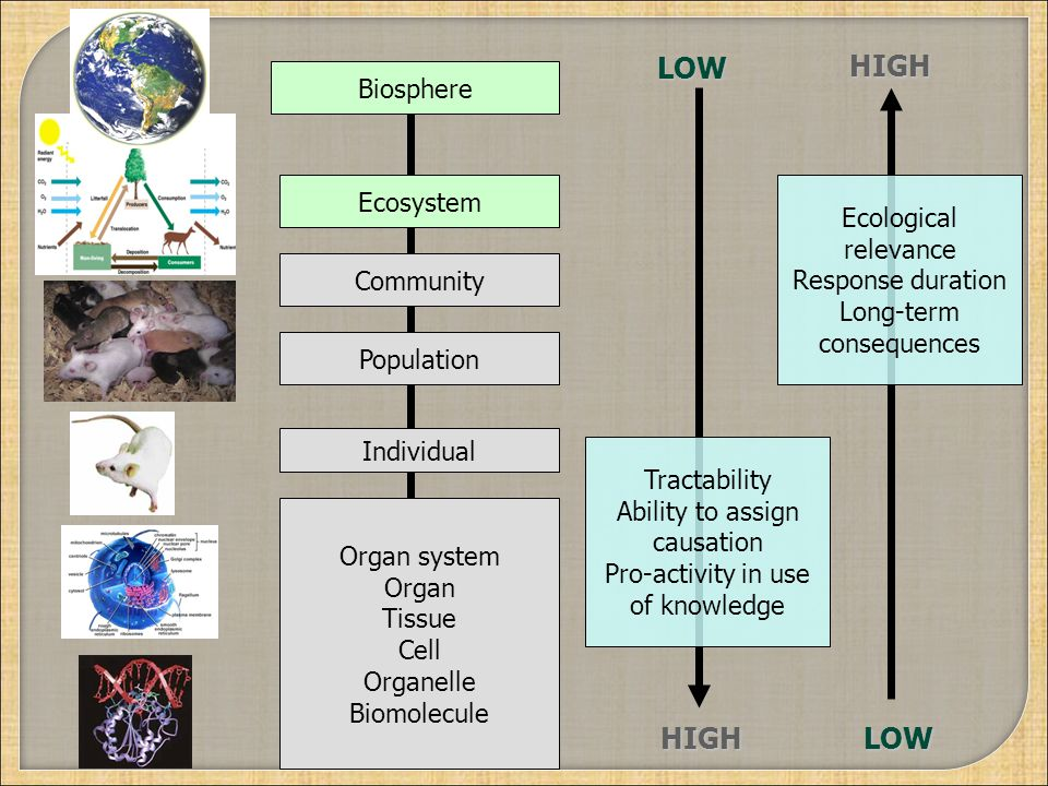 LOW HIGH HIGH LOW Biosphere Ecosystem Ecological relevance