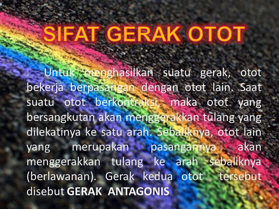 SIFAT GERAK OTOT