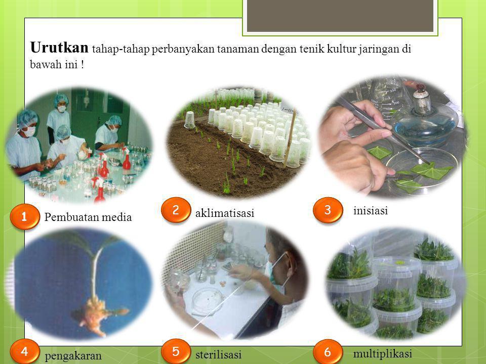 Urutkan tahap-tahap perbanyakan tanaman dengan tenik kultur jaringan di bawah ini !
