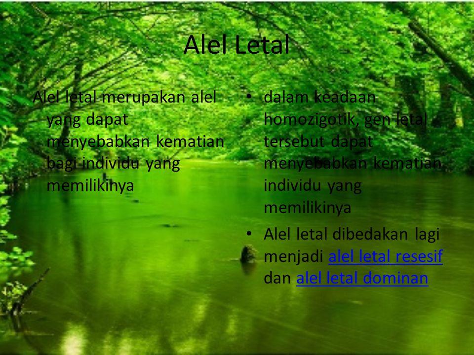Alel Letal Alel letal merupakan alel yang dapat menyebabkan kematian bagi individu yang memilikinya.