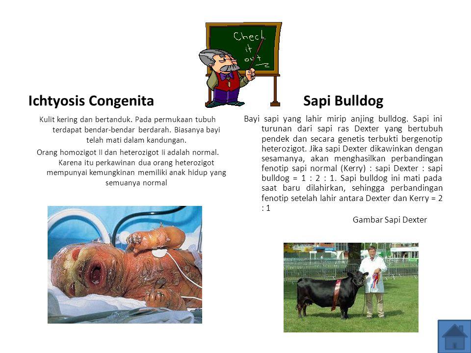 Ichtyosis Congenita Sapi Bulldog