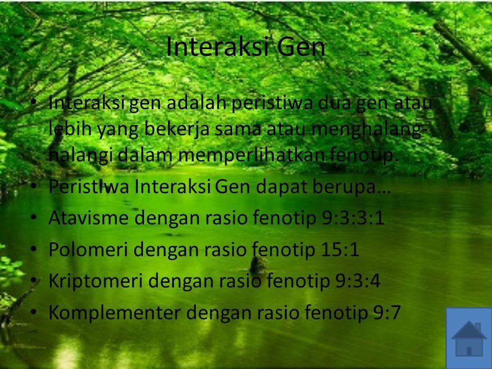 Interaksi Gen Interaksi gen adalah peristiwa dua gen atau lebih yang bekerja sama atau menghalang-halangi dalam memperlihatkan fenotip.