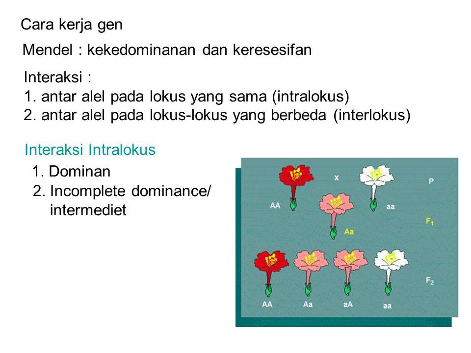Cara kerja gen Mendel : kekedominanan dan keresesifan. Interaksi : antar alel pada lokus yang sama (intralokus)