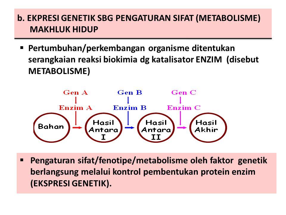 b. EKPRESI GENETIK SBG PENGATURAN SIFAT (METABOLISME) MAKHLUK HIDUP