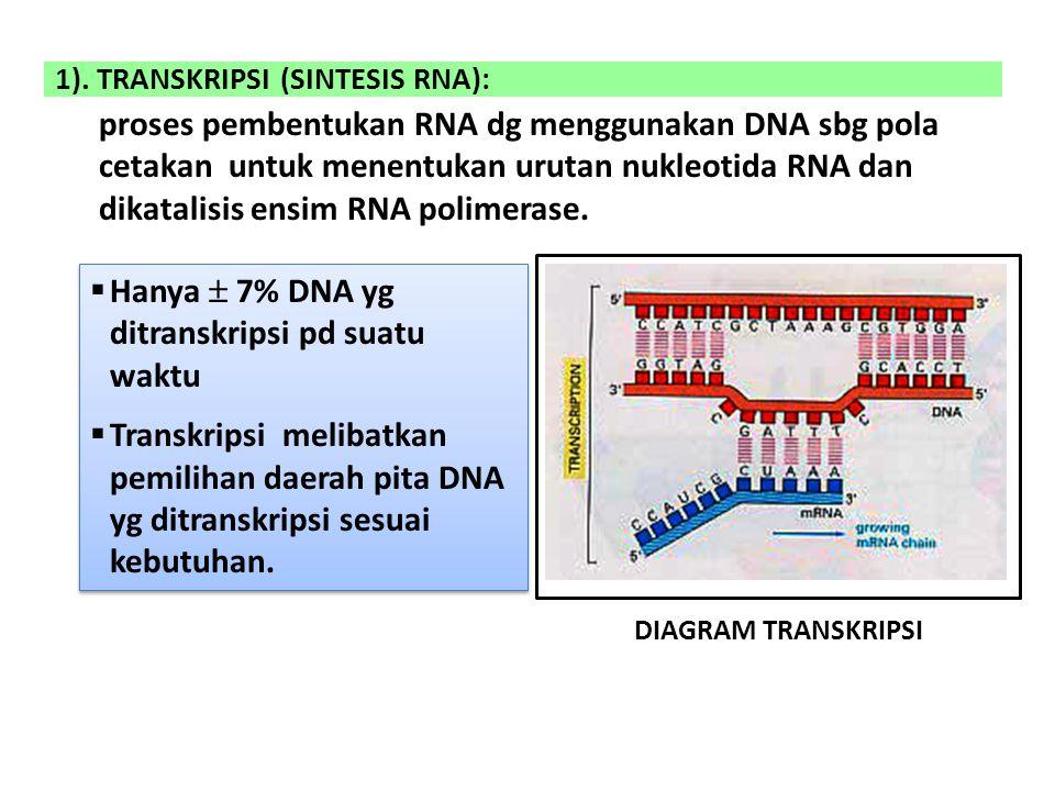 1). TRANSKRIPSI (SINTESIS RNA):
