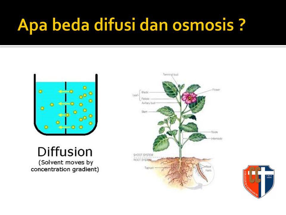 Apa beda difusi dan osmosis