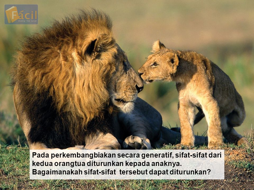 Pada perkembangbiakan secara generatif, sifat-sifat dari kedua orangtua diturunkan kepada anaknya.