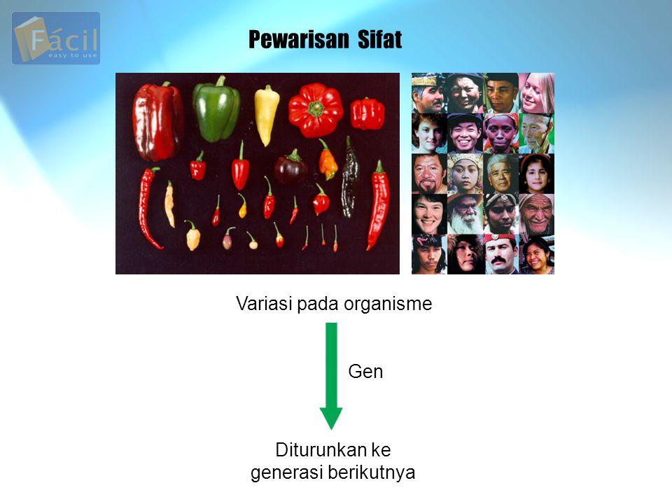 Pewarisan Sifat Variasi pada organisme Gen Diturunkan ke