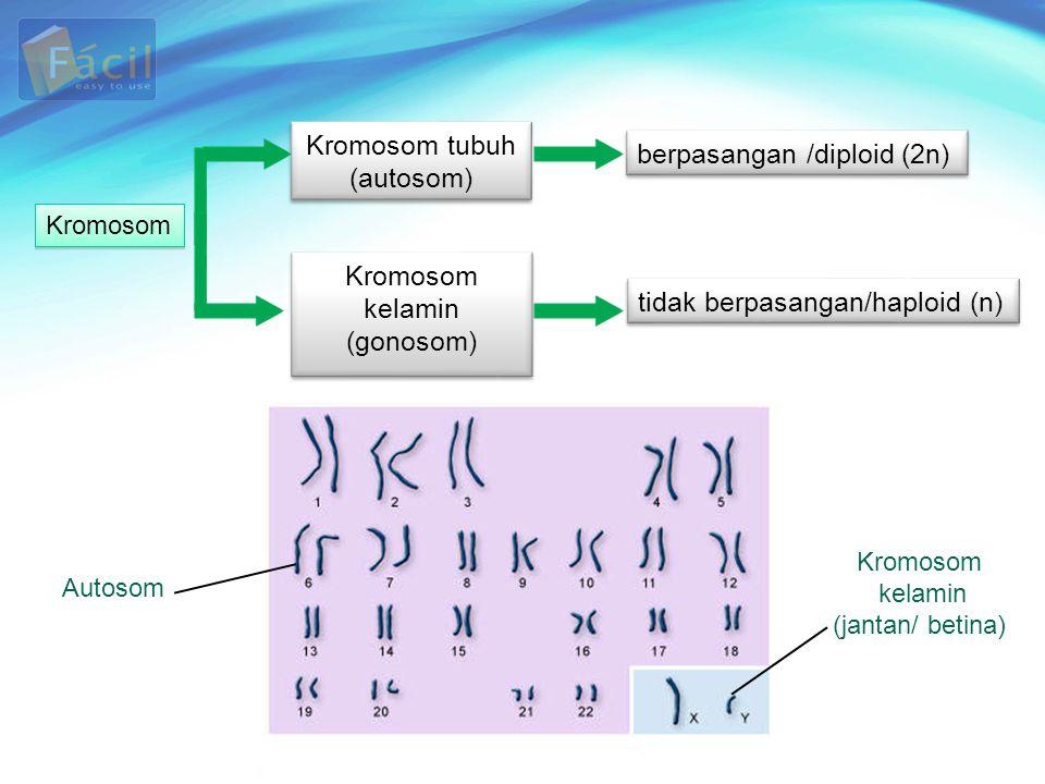 berpasangan /diploid (2n)