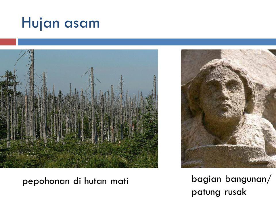 Hujan asam bagian bangunan/ patung rusak pepohonan di hutan mati