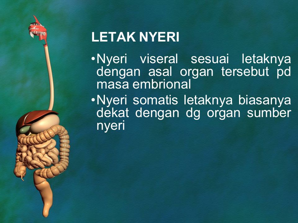 LETAK NYERI Nyeri viseral sesuai letaknya dengan asal organ tersebut pd masa embrional.