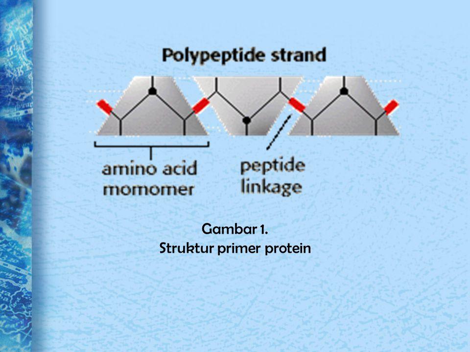 Struktur primer protein