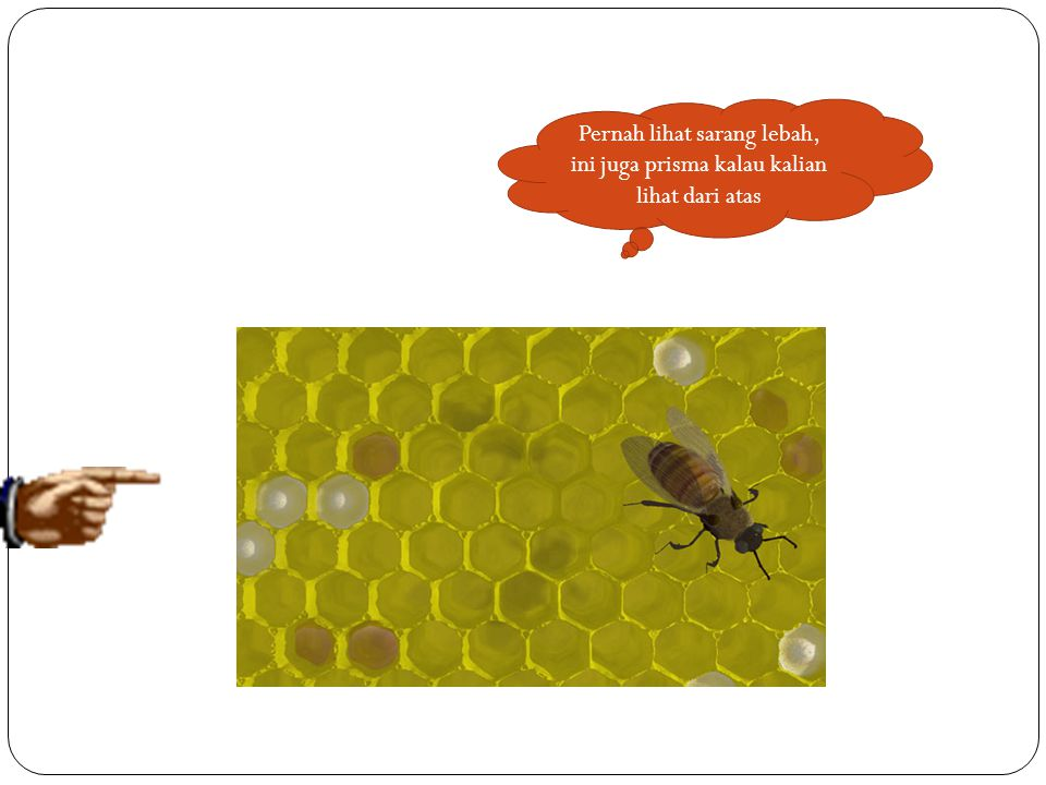 Pernah lihat sarang lebah, ini juga prisma kalau kalian lihat dari atas