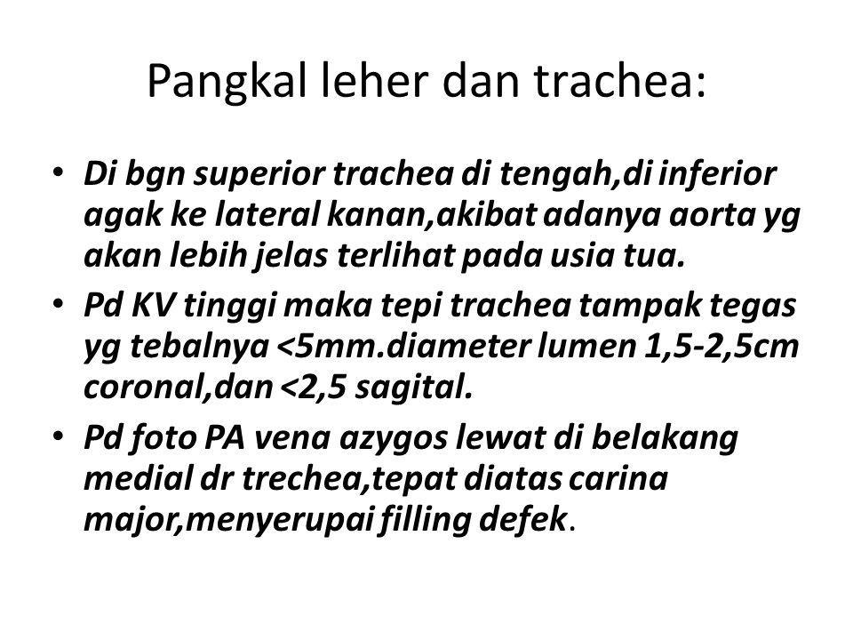 Pangkal leher dan trachea: