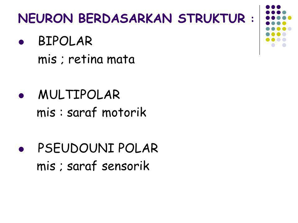 NEURON BERDASARKAN STRUKTUR :