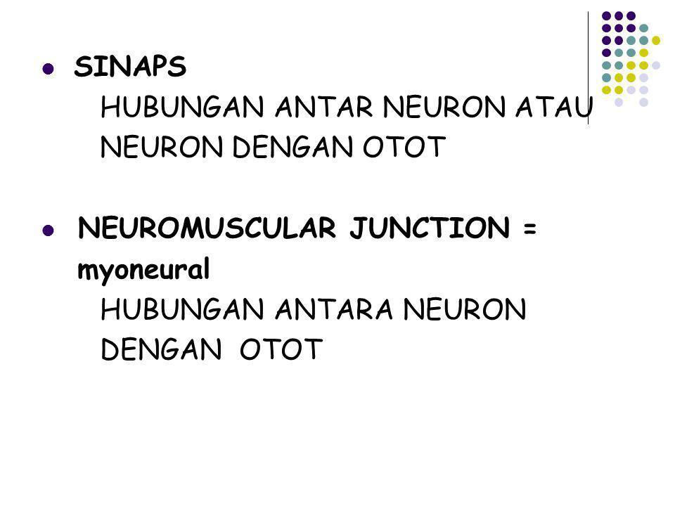 SINAPS HUBUNGAN ANTAR NEURON ATAU. NEURON DENGAN OTOT. NEUROMUSCULAR JUNCTION = myoneural. HUBUNGAN ANTARA NEURON.