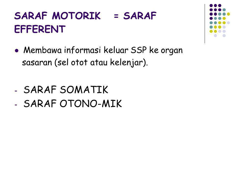 SARAF MOTORIK = SARAF EFFERENT